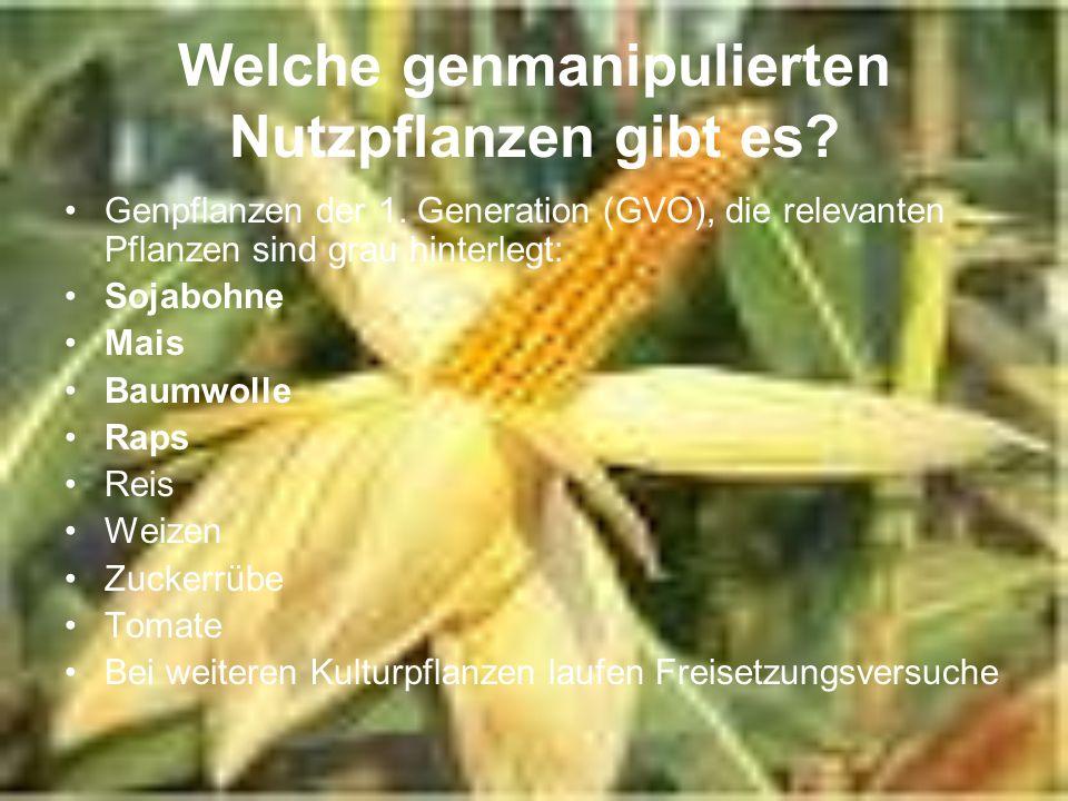 Welche genmanipulierten Nutzpflanzen gibt es? Genpflanzen der 1. Generation (GVO), die relevanten Pflanzen sind grau hinterlegt: Sojabohne Mais Baumwo