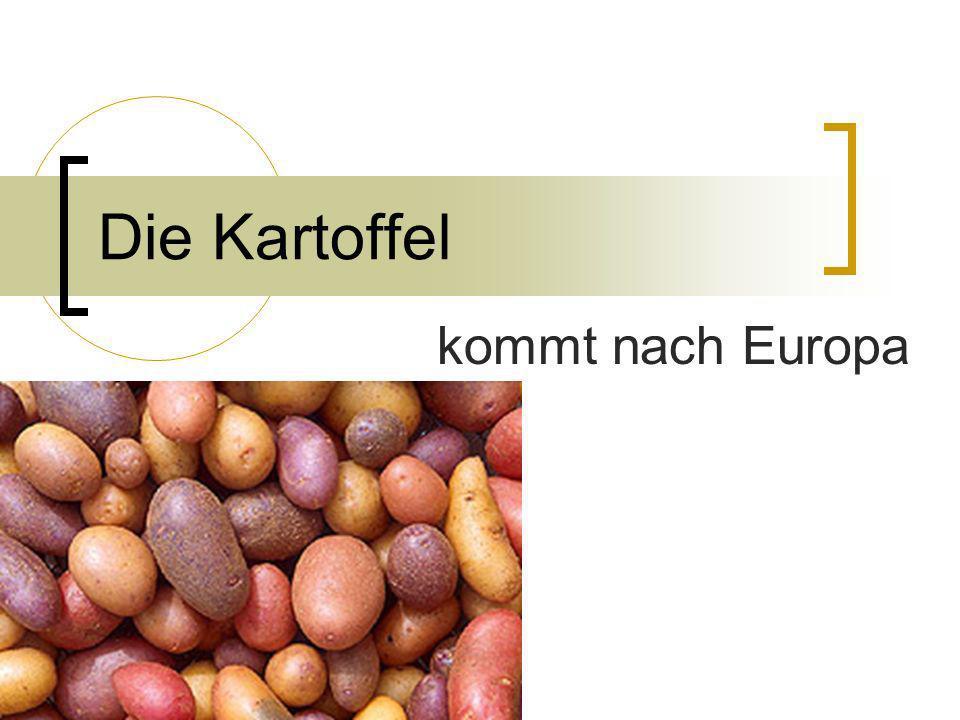 Die Kartoffel kommt nach Europa