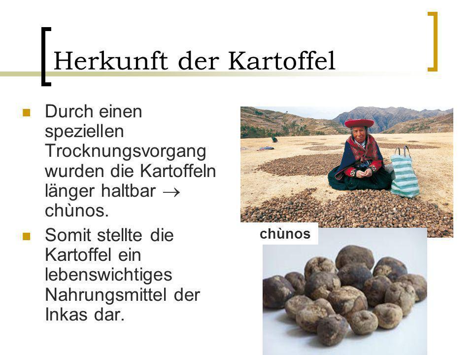 Durch einen speziellen Trocknungsvorgang wurden die Kartoffeln länger haltbar chùnos. Somit stellte die Kartoffel ein lebenswichtiges Nahrungsmittel d