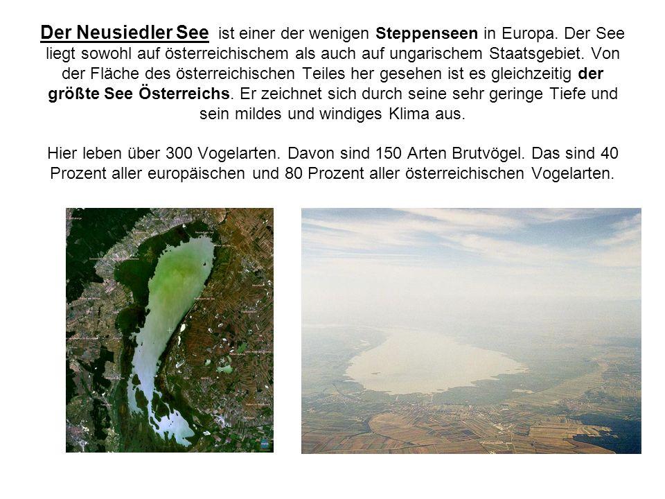 Der Neusiedler See ist einer der wenigen Steppenseen in Europa. Der See liegt sowohl auf österreichischem als auch auf ungarischem Staatsgebiet. Von d
