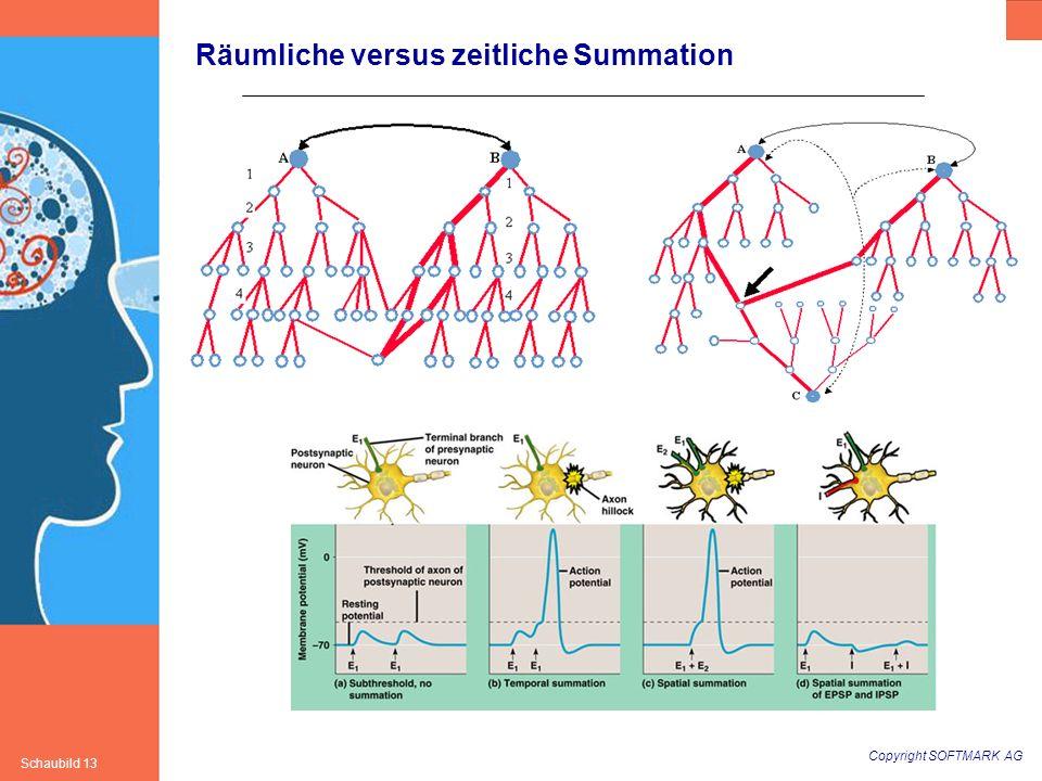 Copyright SOFTMARK AG Schaubild 13 Räumliche versus zeitliche Summation