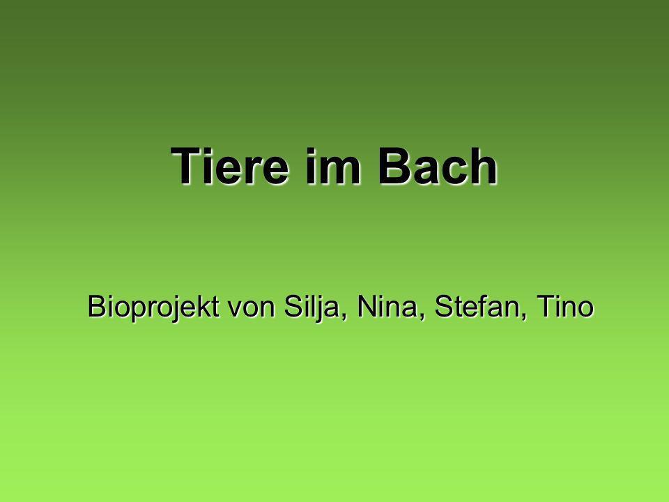 Tiere im Bach Bioprojekt von Silja, Nina, Stefan, Tino