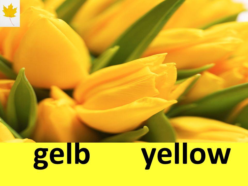 gelbyellow