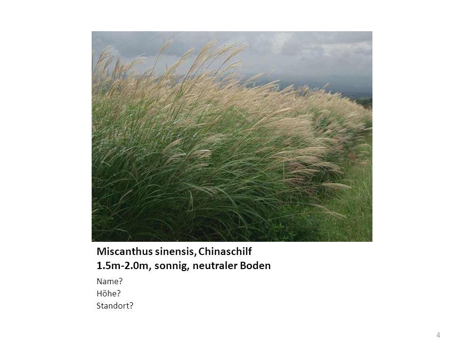 Miscanthus sinensis, Chinaschilf 1.5m-2.0m, sonnig, neutraler Boden Name? Höhe? Standort? 4