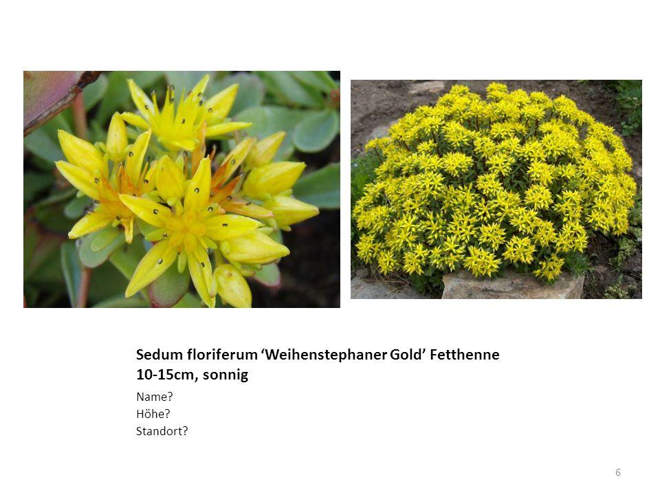Phlox paniculata, Flammenblume 70cm-1.1m, Jul-Sep Name? Wuchshöhe? Wann blüht sie? 7