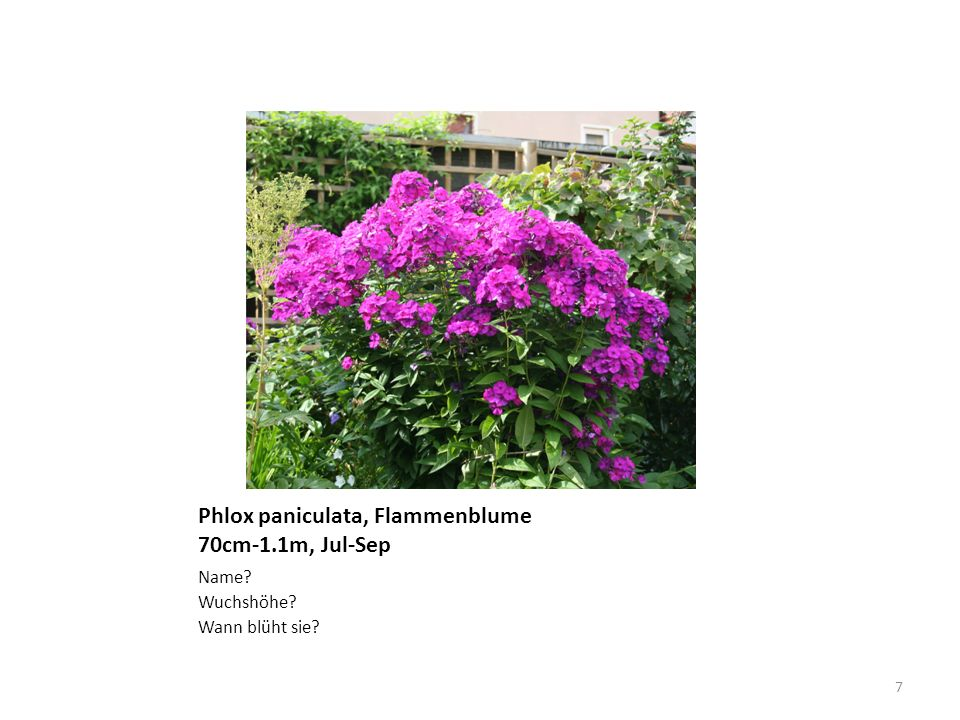 Alisma plantago-aquatica ganzrandig, weiss Name? Welche Form hat der Blattrand? Blütenfarbe? 8