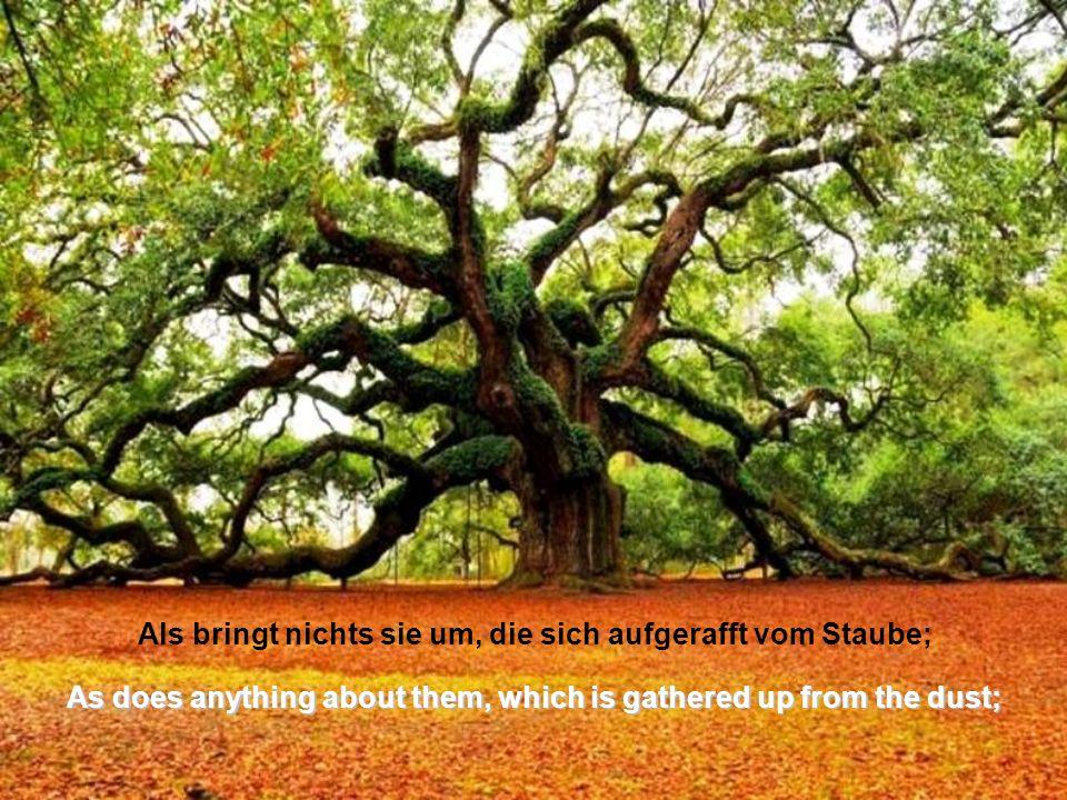 Berge Laub sind aufgebaut, Wachstum ohne Schranke, Mountains are built up foliage, growing without bound,