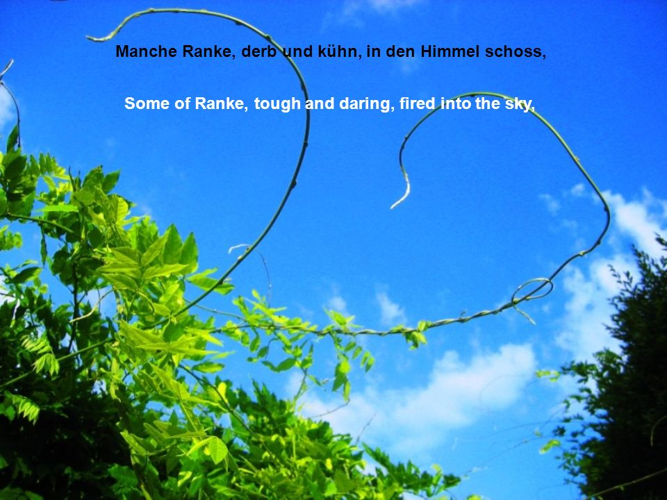 Manche Ranke, derb und kühn, in den Himmel schoss, Some of Ranke, tough and daring, fired into the sky,