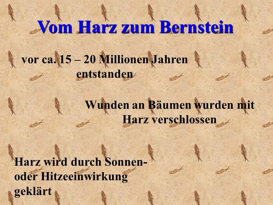 Vom Harz zum Bernstein vor ca.