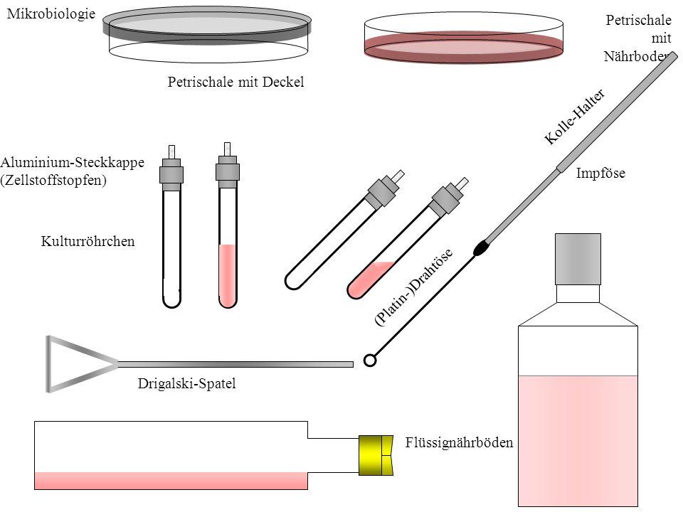 Mikrobiologie Petrischale mit Deckel Petrischale mit Nährboden Aluminium-Steckkappe (Zellstoffstopfen) Kulturröhrchen Kolle-Halter (Platin-)Drahtöse I