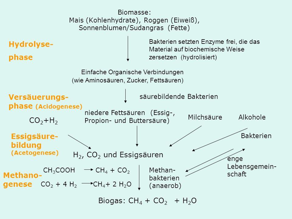 Biomasse: Mais (Kohlenhydrate), Roggen (Eiweiß), Sonnenblumen/Sudangras (Fette) Hydrolyse- phase Bakterien setzten Enzyme frei, die das Material auf b