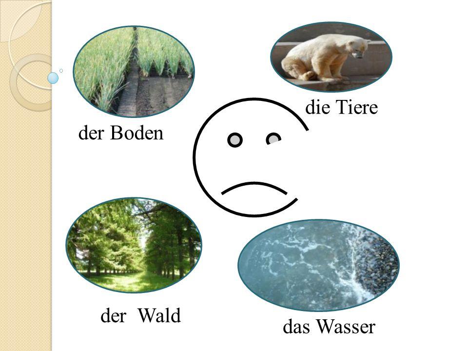 der Wald die Tiere das Wasser der Boden