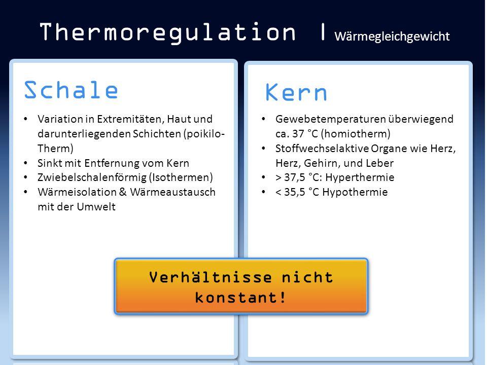 Schale Thermoregulation | Wärmegleichgewicht Kern Gewebetemperaturen überwiegend ca. 37 °C (homiotherm) Stoffwechselaktive Organe wie Herz, Herz, Gehi