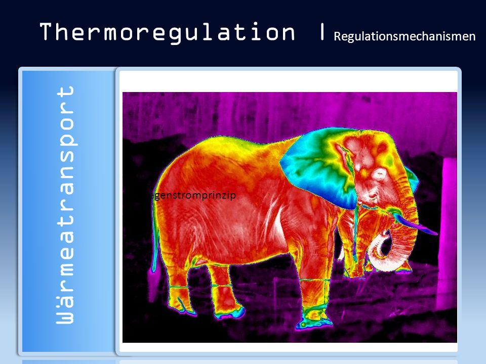 Thermoregulation | Regulationsmechanismen Wärmeatransport Der Wärmeaustausch zwischen 2 Objekten ist proportional zur Differenz ihrer Temperaturen. Wä