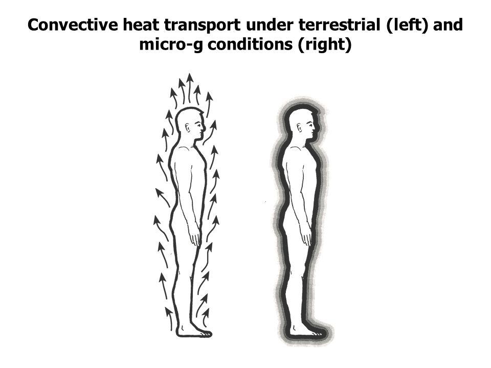 Veränderungen nach 120 Tagen im All Convective heat transport under terrestrial (left) and micro-g conditions (right)