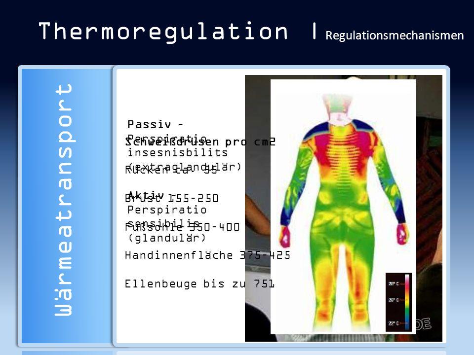 Thermoregulation | Regulationsmechanismen Wärmeatransport Passiv – Perspiratio insesnisbilits (extraglandulär) Aktiv – Perspiratio sensibilis (glandul