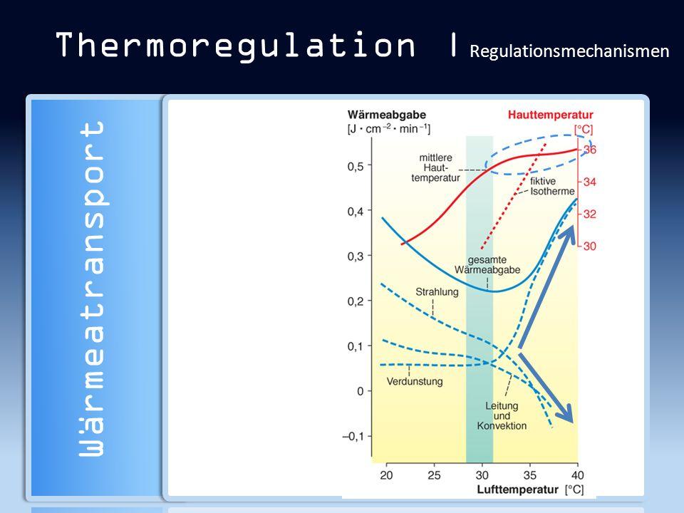 Thermoregulation | Regulationsmechanismen Wärmeatransport