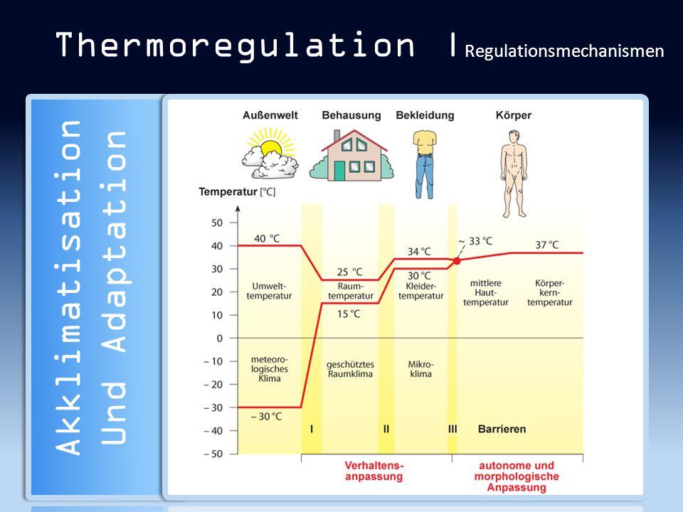 Thermoregulation | Regulationsmechanismen Akklimatisation Und Adaptation
