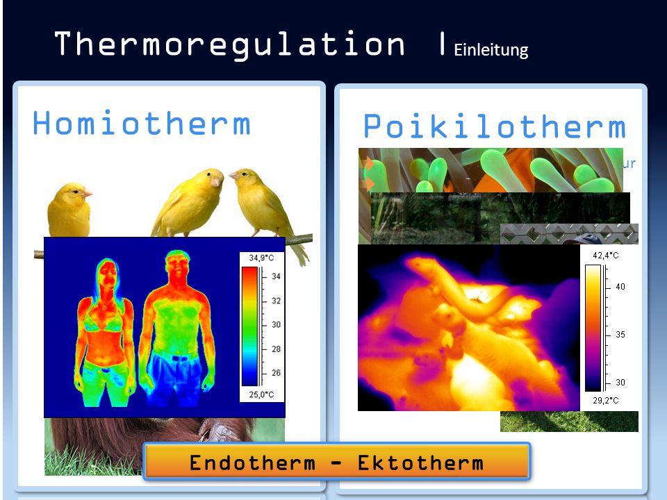 Homiotherm Konstante Körpertemperatur Enge Grenzen Kaum Toleranz für Abweichungen Thermoregulation | Einleitung Poikilotherm Anpassung an Umgebungstem