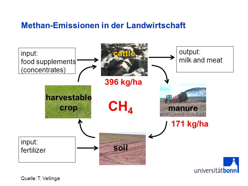 Methan-Emissionen in der Landwirtschaft Quelle: T. Vellinga soil harvestable crop cattle manure input: food supplements (concentrates) input: fertiliz
