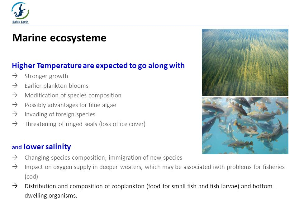 Higher Temperature are expected to go along with Stronger growth Earlier plankton blooms Modification of species composition Possibly advantages for blue algae Invading of foreign species Threatening of ringed seals (loss of ice cover) and lower salinity Changing species composition; immigration of new species Impact on oxygen supply in deeper weaters, which may be associated iwth problems for fisheries (cod) Distribution and composition of zooplankton (food for small fish and fish larvae) and bottom- dwelling organisms.