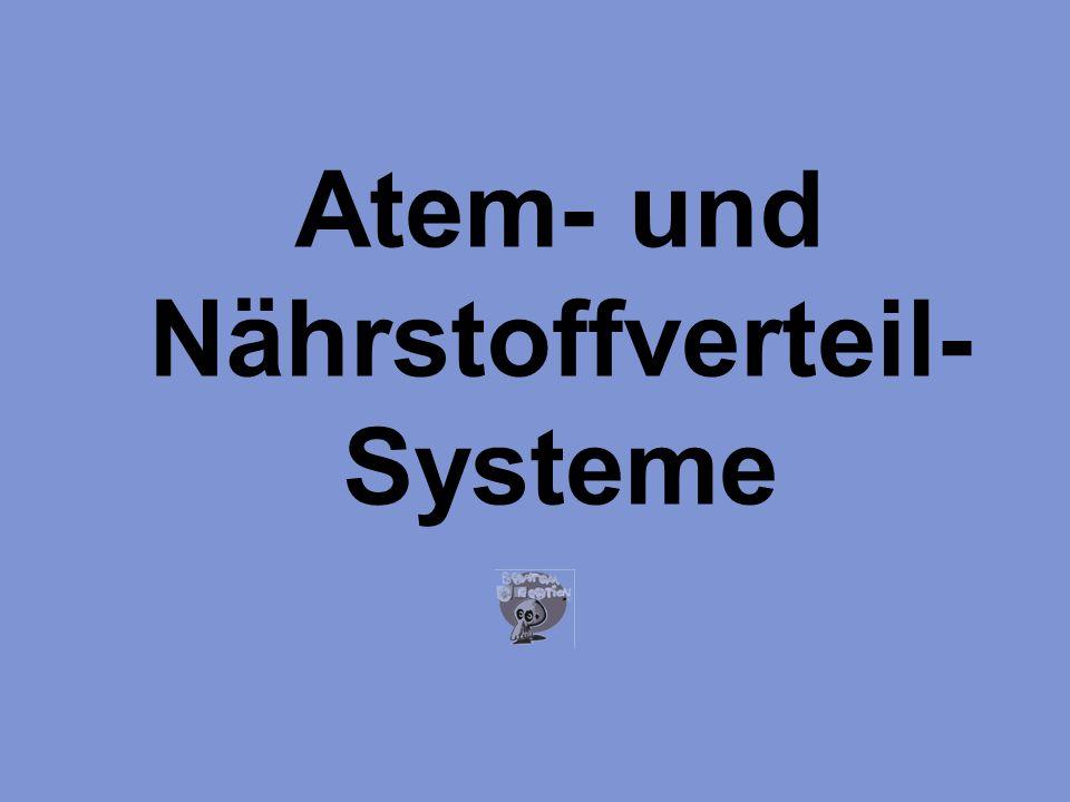 Atem- und Nährstoffverteil- Systeme