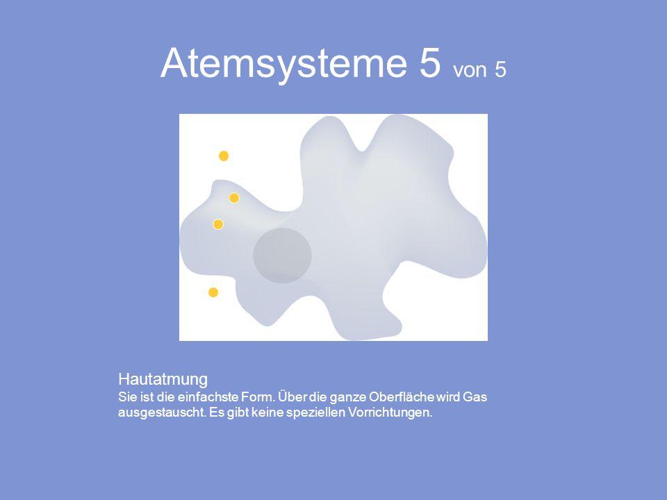 Atemsysteme 5 von 5 Hautatmung Sie ist die einfachste Form. Über die ganze Oberfläche wird Gas ausgestauscht. Es gibt keine speziellen Vorrichtungen.