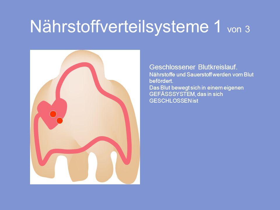 Geschlossener Blutkreislauf. Nährstoffe und Sauerstoff werden vom Blut befördert. Das Blut bewegt sich in einem eigenen GEFÄSSSYSTEM, das in sich GESC