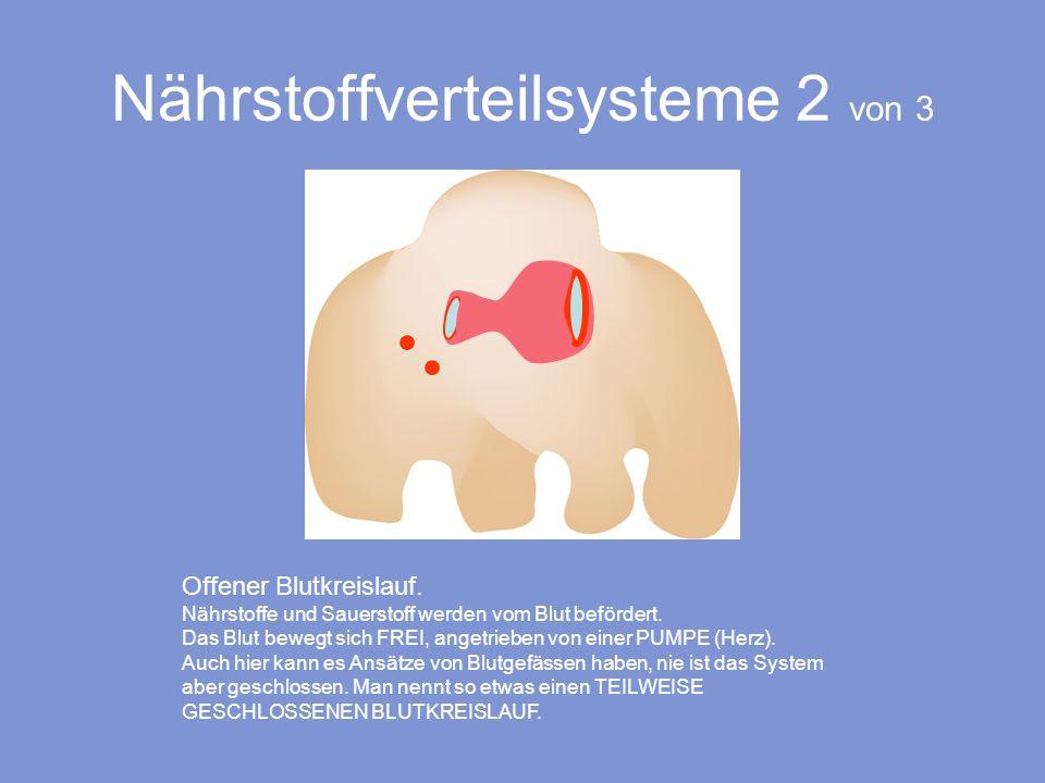 Nährstoffverteilsysteme 2 von 3 Offener Blutkreislauf. Nährstoffe und Sauerstoff werden vom Blut befördert. Das Blut bewegt sich FREI, angetrieben von