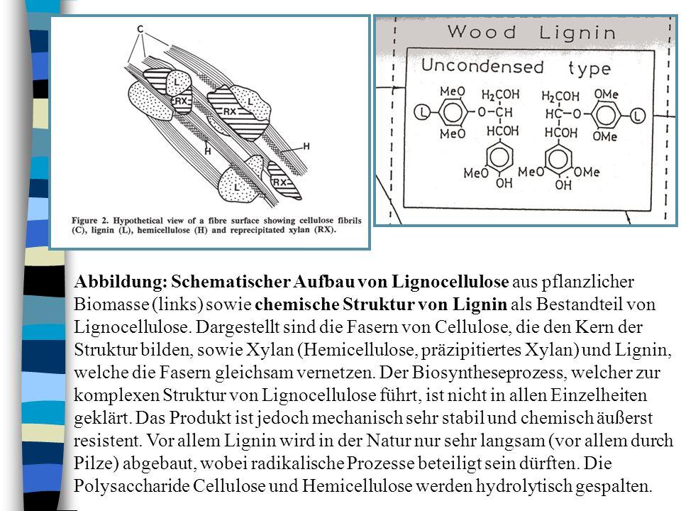 Abbildung: Schematischer Aufbau von Lignocellulose aus pflanzlicher Biomasse (links) sowie chemische Struktur von Lignin als Bestandteil von Lignocell