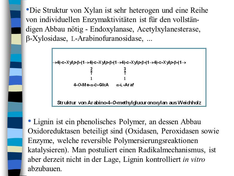 Die Struktur von Xylan ist sehr heterogen und eine Reihe von individuellen Enzymaktivitäten ist für den vollstän- digen Abbau nötig - Endoxylanase, Ac