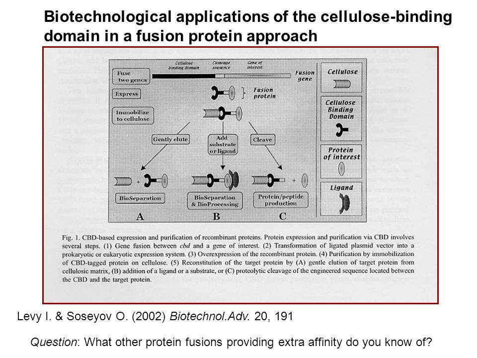 Biotechnological applications of the cellulose-binding domain in a fusion protein approach Levy I. & Soseyov O. (2002) Biotechnol.Adv. 20, 191 Questio
