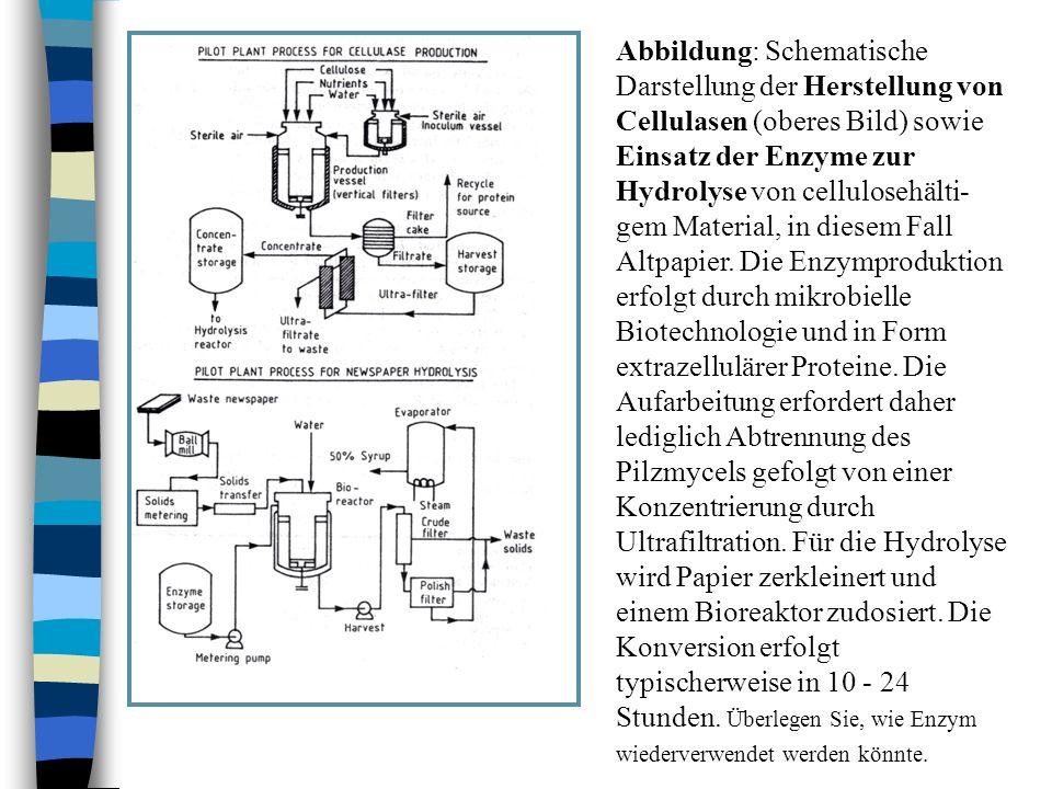 Abbildung: Schematische Darstellung der Herstellung von Cellulasen (oberes Bild) sowie Einsatz der Enzyme zur Hydrolyse von cellulosehälti- gem Materi