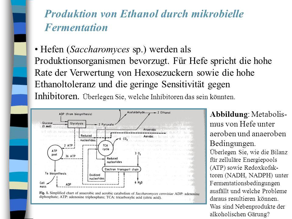 Produktion von Ethanol durch mikrobielle Fermentation Hefen (Saccharomyces sp.) werden als Produktionsorganismen bevorzugt. Für Hefe spricht die hohe