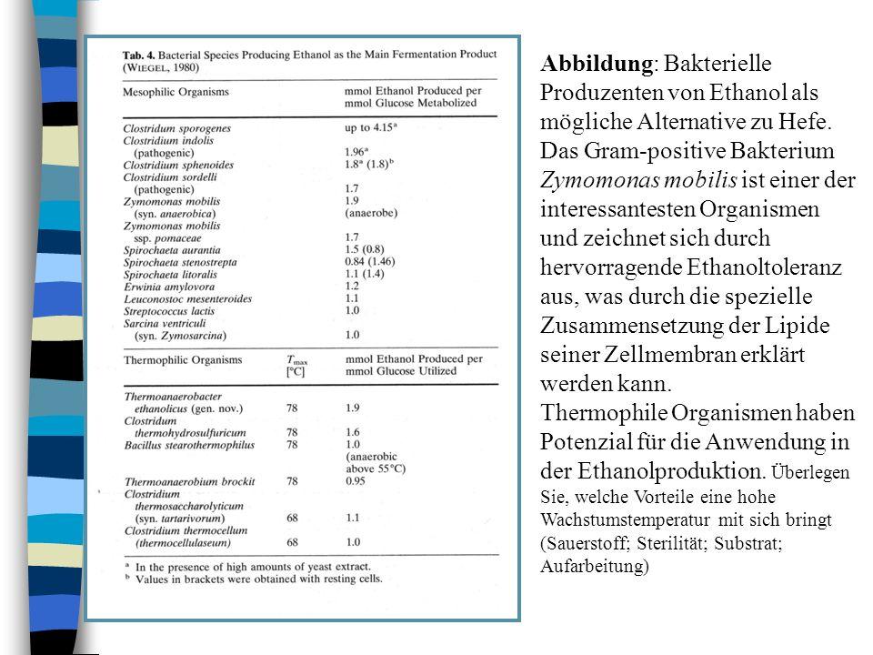 Abbildung: Bakterielle Produzenten von Ethanol als mögliche Alternative zu Hefe. Das Gram-positive Bakterium Zymomonas mobilis ist einer der interessa