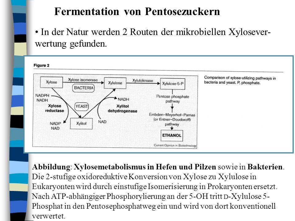 Fermentation von Pentosezuckern In der Natur werden 2 Routen der mikrobiellen Xylosever- wertung gefunden. Abbildung: Xylosemetabolismus in Hefen und