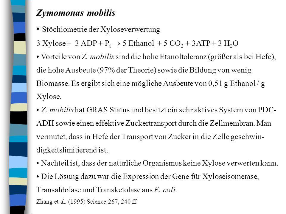 Zymomonas mobilis Stöchiometrie der Xyloseverwertung 3 Xylose + 3 ADP + P i 5 Ethanol + 5 CO 2 + 3ATP + 3 H 2 O Vorteile von Z. mobilis sind die hohe