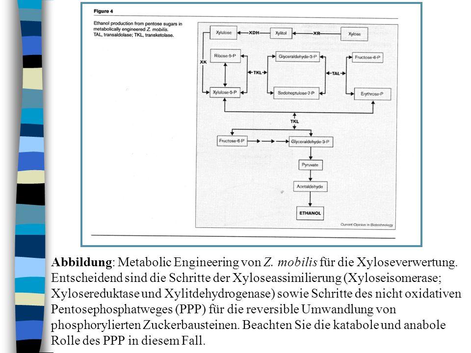 Abbildung: Metabolic Engineering von Z. mobilis für die Xyloseverwertung. Entscheidend sind die Schritte der Xyloseassimilierung (Xyloseisomerase; Xyl