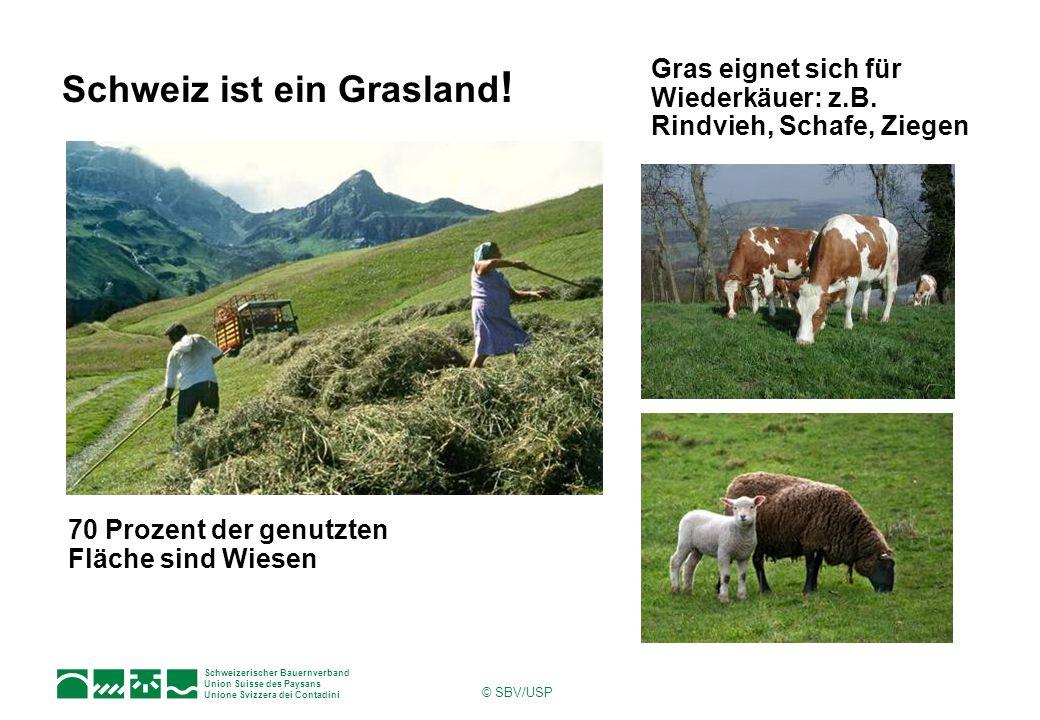 Schweizerischer Bauernverband Union Suisse des Paysans Unione Svizzera dei Contadini © SBV/USP Schweiz ist ein Grasland ! 70 Prozent der genutzten Flä