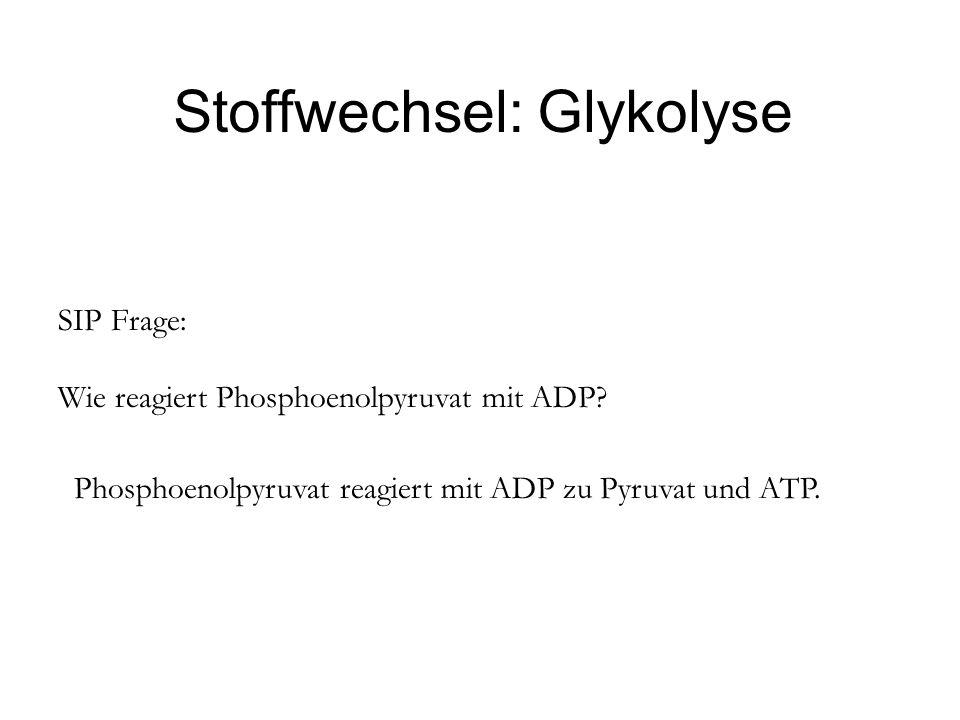 Stoffwechsel: Glykolyse SIP Frage: Wie reagiert Phosphoenolpyruvat mit ADP? Phosphoenolpyruvat reagiert mit ADP zu Pyruvat und ATP.
