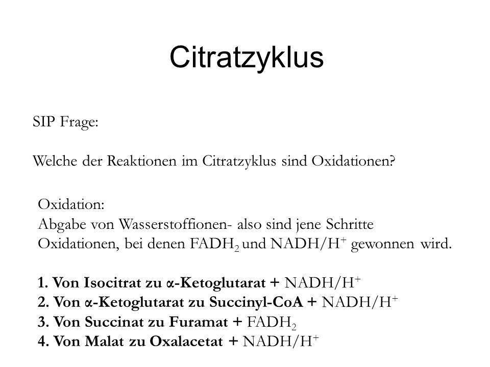Citratzyklus SIP Frage: Welche der Reaktionen im Citratzyklus sind Oxidationen? Oxidation: Abgabe von Wasserstoffionen- also sind jene Schritte Oxidat