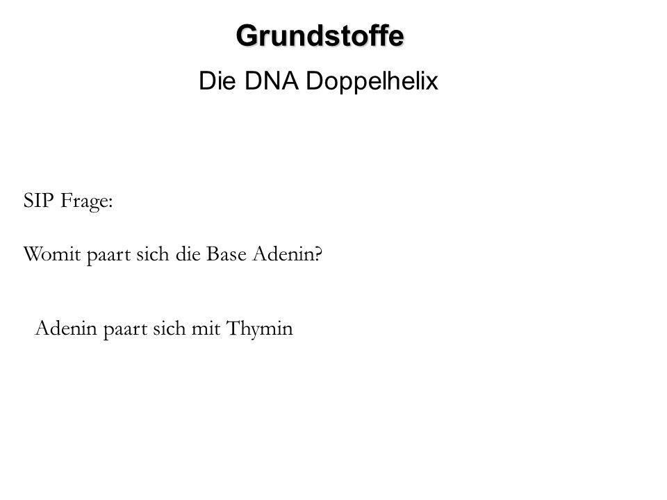 Grundstoffe Die DNA Doppelhelix SIP Frage: Womit paart sich die Base Adenin? Adenin paart sich mit Thymin