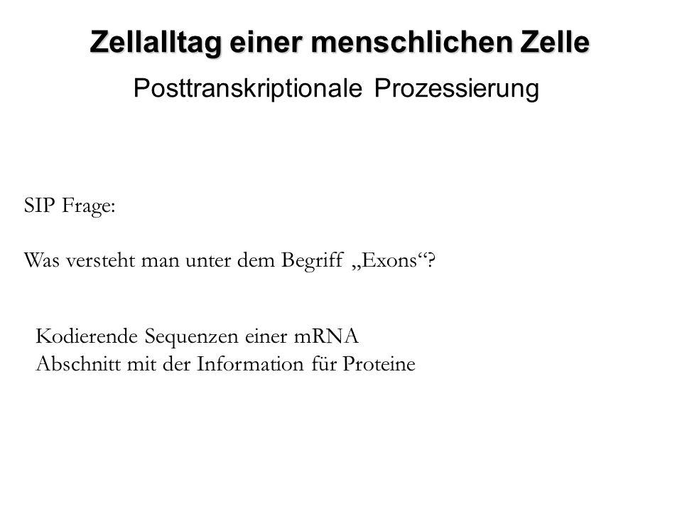 SIP Frage: Was versteht man unter dem Begriff Exons? Kodierende Sequenzen einer mRNA Abschnitt mit der Information für Proteine Zellalltag einer mensc