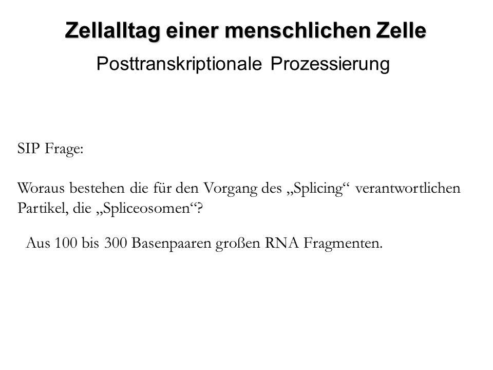 Zellalltag einer menschlichen Zelle Posttranskriptionale Prozessierung SIP Frage: Woraus bestehen die für den Vorgang des Splicing verantwortlichen Pa