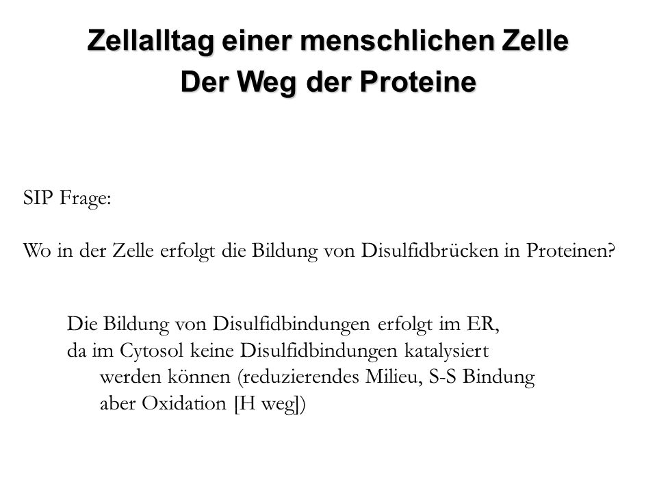 SIP Frage: Wo in der Zelle erfolgt die Bildung von Disulfidbrücken in Proteinen? Die Bildung von Disulfidbindungen erfolgt im ER, da im Cytosol keine