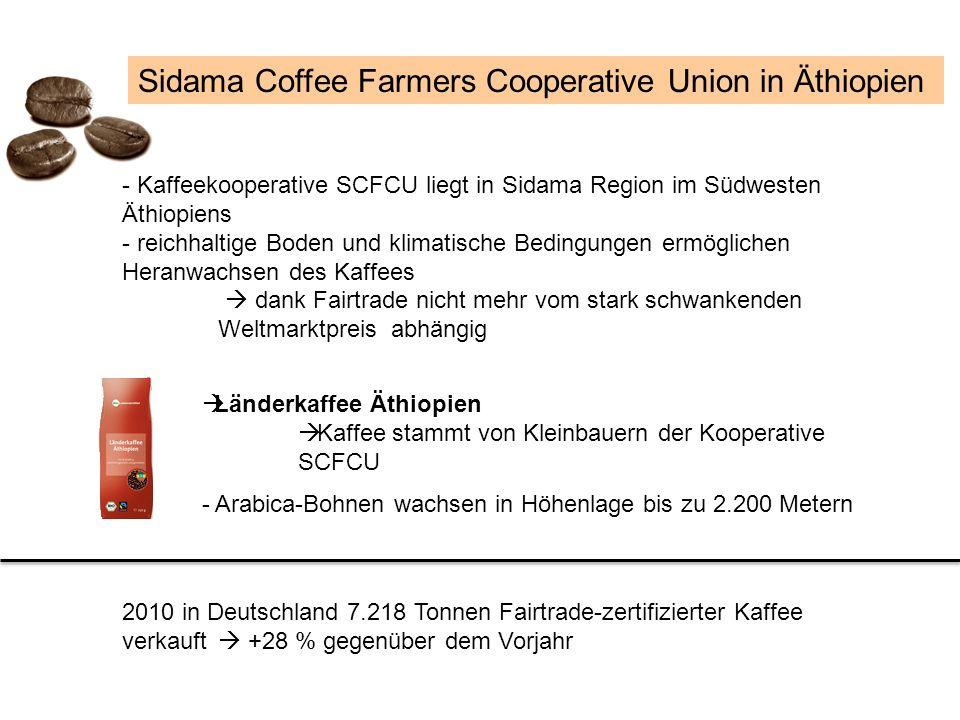 Sidama Coffee Farmers Cooperative Union in Äthiopien - Kaffeekooperative SCFCU liegt in Sidama Region im Südwesten Äthiopiens - reichhaltige Boden und