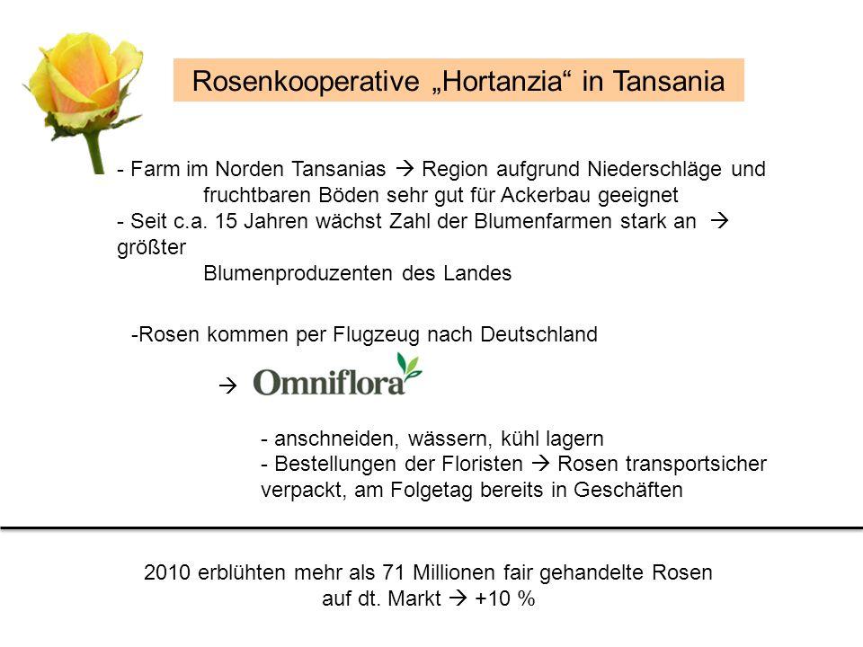 -Rosen kommen per Flugzeug nach Deutschland - anschneiden, wässern, kühl lagern - Bestellungen der Floristen Rosen transportsicher verpackt, am Folget