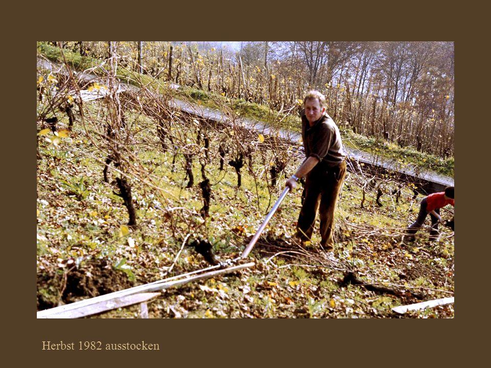 Herbst 1982 ausstocken
