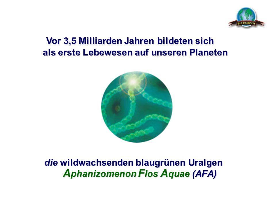 die wildwachsenden blaugrünen Uralgen Aphanizomenon Flos Aquae (AFA) Vor 3,5 Milliarden Jahren b bb bildeten sich als erste Lebewesen auf unseren Plan