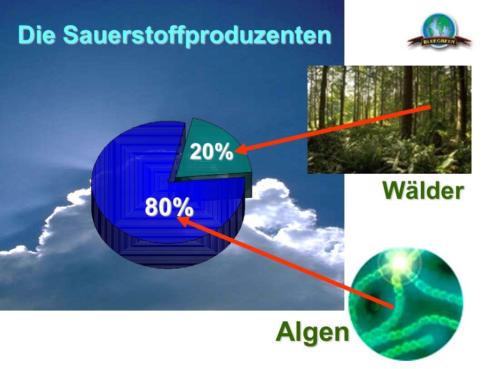 Die Sauerstoffproduzenten 80% 20% Wälder Algen